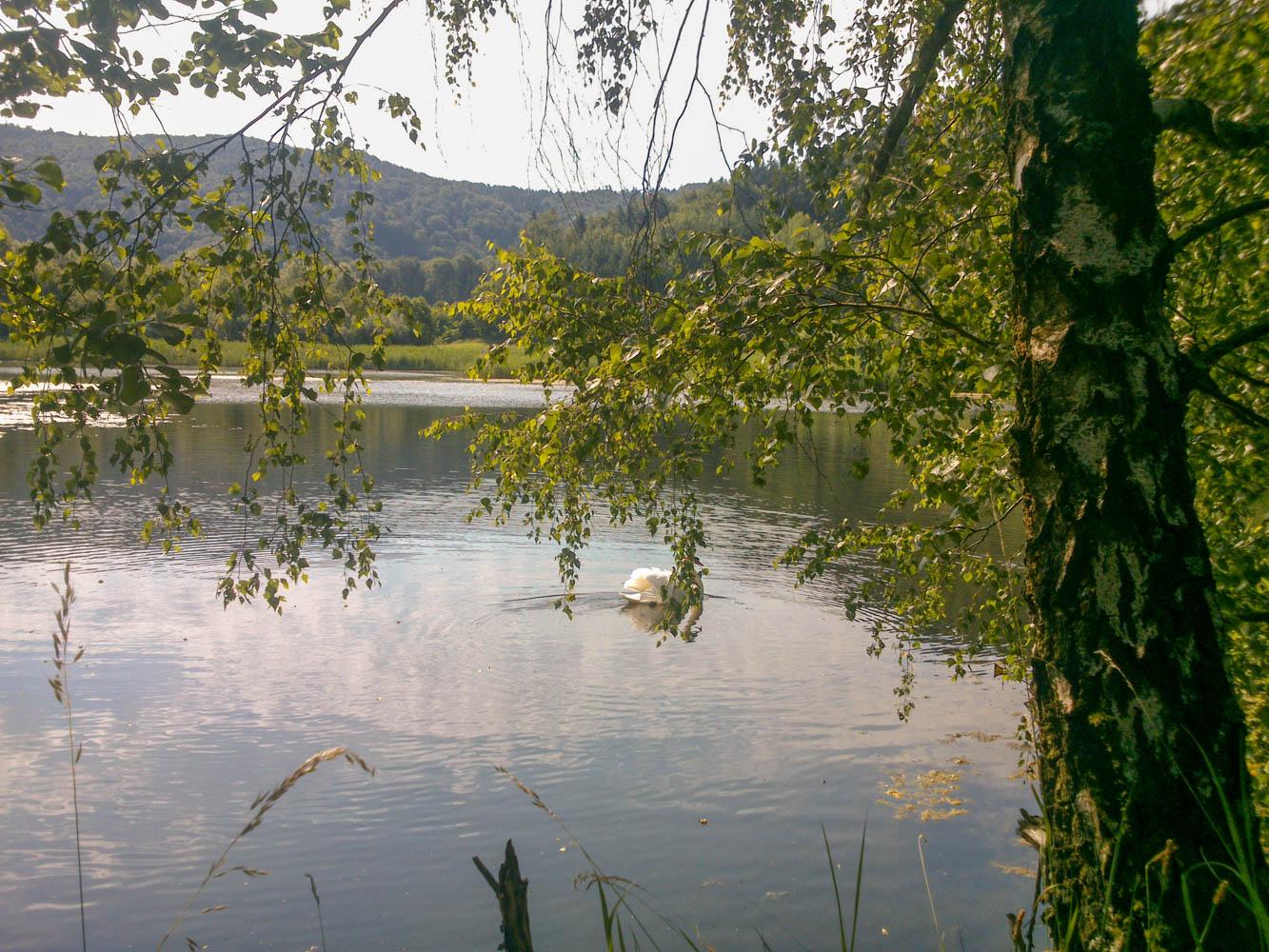 Ehemaliger Quarzwerke Teich mit Schwann